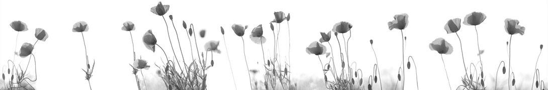 Pflanzenbilder // Pictures: Laszlo Maczky www.fotoart-maczky.eu