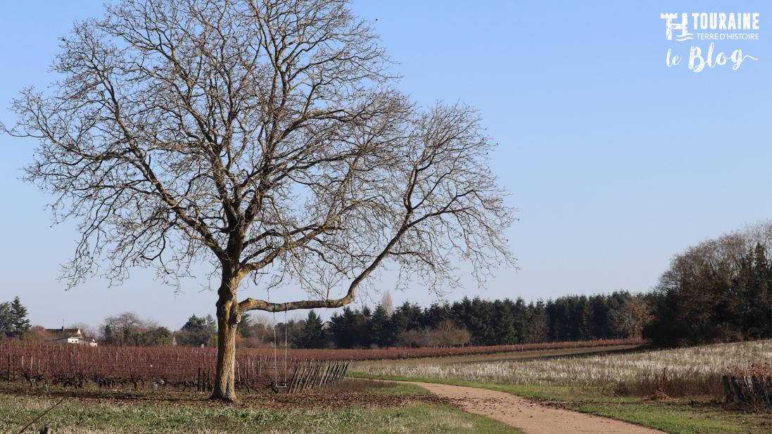 AOC Montlouis - Vins du Val de Loire