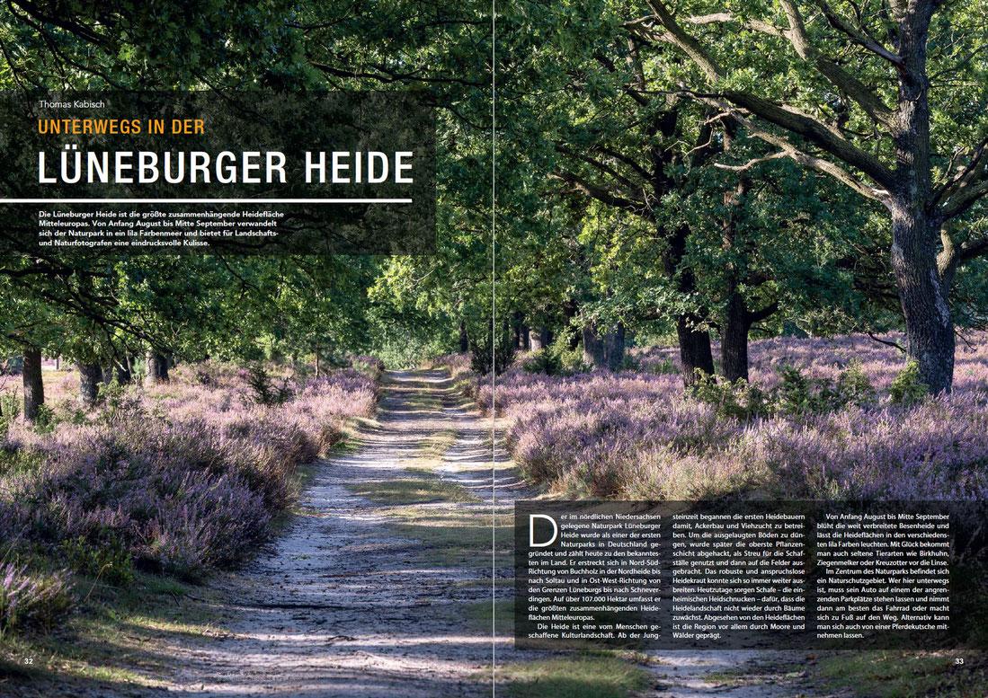 Naturfotografie in der Lüneburger Heide