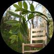 Grünholz entsteht aus Eschenzweig 6