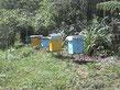 Hacemos restauración pasiva de 80 ha de bosque apoyados por la polinización de colmenas que nos entregan sus excedentes de miel bajo los principios de permapicultura. Fabricamos queso, yoghurt y pan