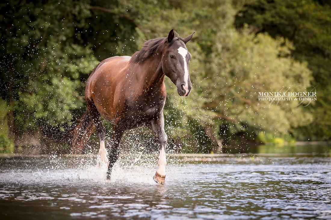 Pferde frei im Wasser