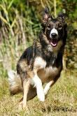 Témoignage Éducation canine dressage Charente Maritime (24) gaia