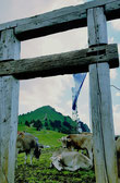 Porta Alpinae am Grünten