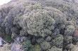 """Dedicada a la conservación del bosque de  niebla tropical (2550 msnm). Su patrimonio hídrico es la quebrada """"Los Parras"""" que recorre el   predio y alimenta parcialmente a dos acueductos locales."""