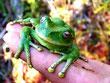 Educación Ambiental, Ecoturismo, Investigación y Terapias de medicina natural bioenergética