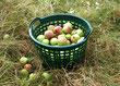Besichtigung Apfelwiese