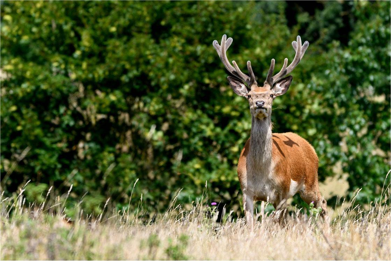 goldener Herbstbeginn am Tollensesee