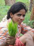 Planter son riz