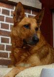 Auch Zoki bleibt auf seiner jetzt Ex-Pflegestelle. Wir sind so glücklich darüber!