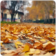 Herbstlaub auf dem Gehsteig