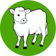 Infections with Cryptosporidium parvum for cattle and calves