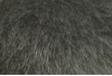 ブルーポメラニアンの特徴は黒熊のような強そうな印象を与える所
