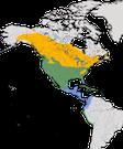 Karte zur Verbreitung des Keilschwanz-Regenpfeifers (Charadrius vociferus)