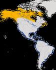 Karte zur Verbreitung des Amerikanischen Sandregenpfeifers (Charadrius semipalmatus)