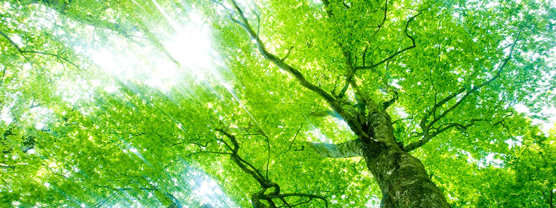 元気に生い茂る緑の木々