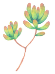 多肉植物画像