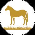 Pferdepension Berlin Brandenburg Duif