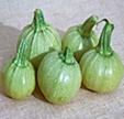 Zucchini runde Früchte mit hellgrüner Schale Bild Reinsaat