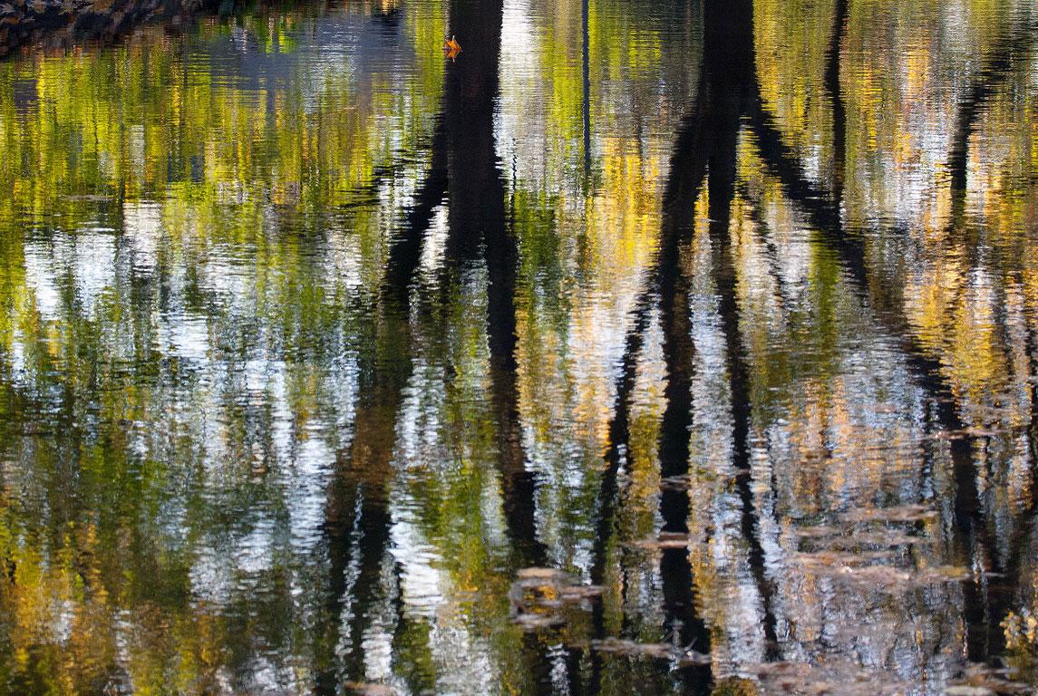 Alberi riflessi nell'acqua Nr. 03
