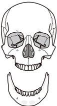 アゴのゆがみ・顎関節症