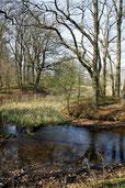 Heiligendamm Wald Teich Bäume