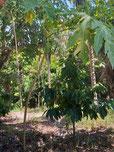 Das Land in Bahia