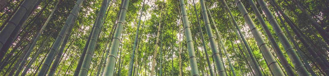 Bambus - für Bambuszahnbürsten und andere nachhaltige Produkte. Bambus für apfeldental.at