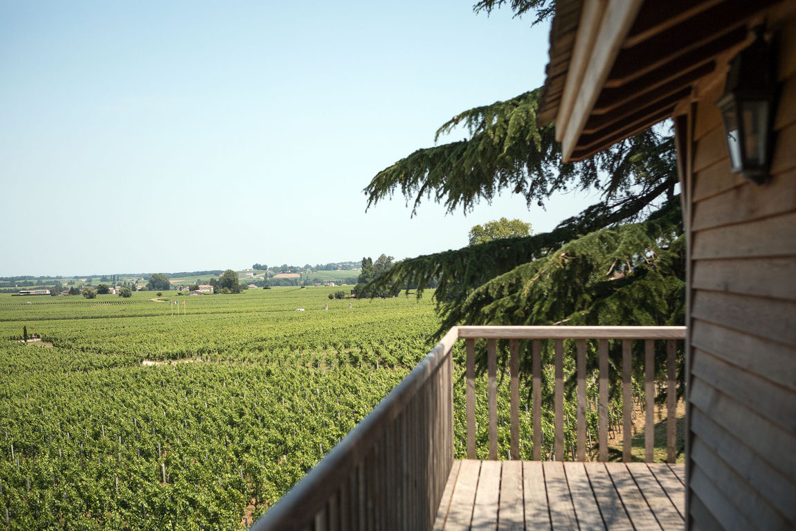 Blick vom Baumhaus des Relais Franc Mayne auf die Weinreben.
