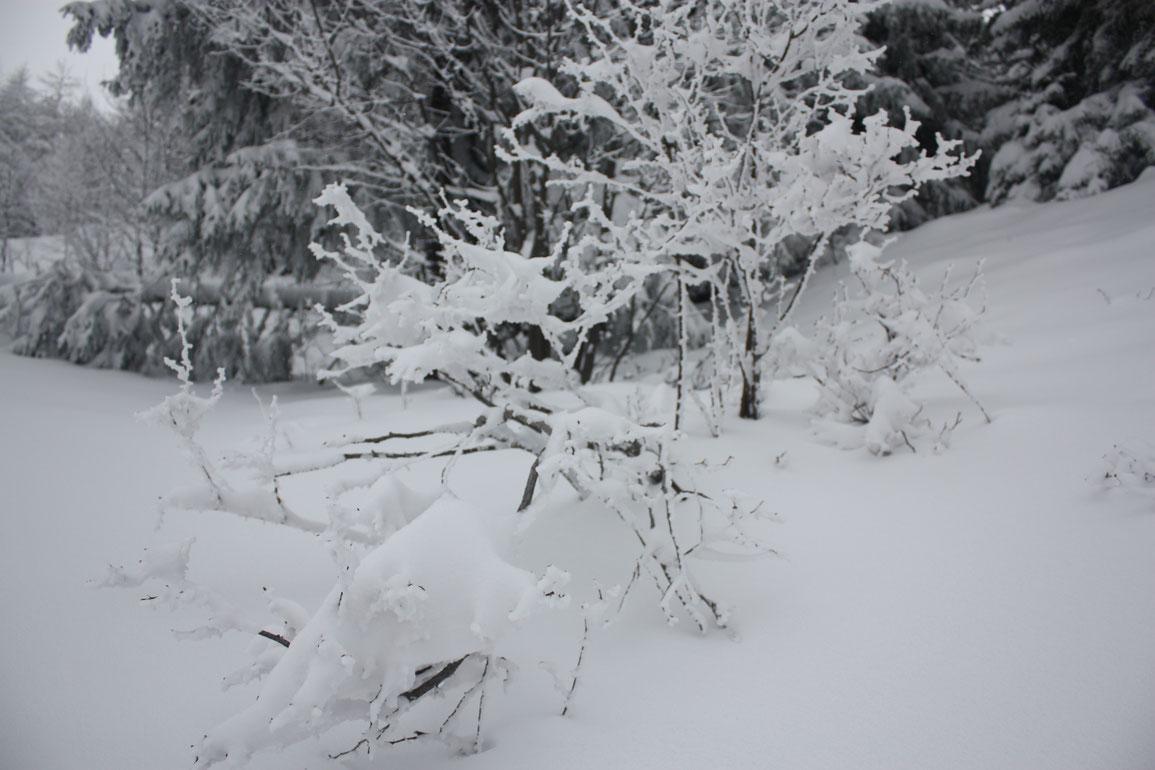 C'est beau l'hiver quand même...