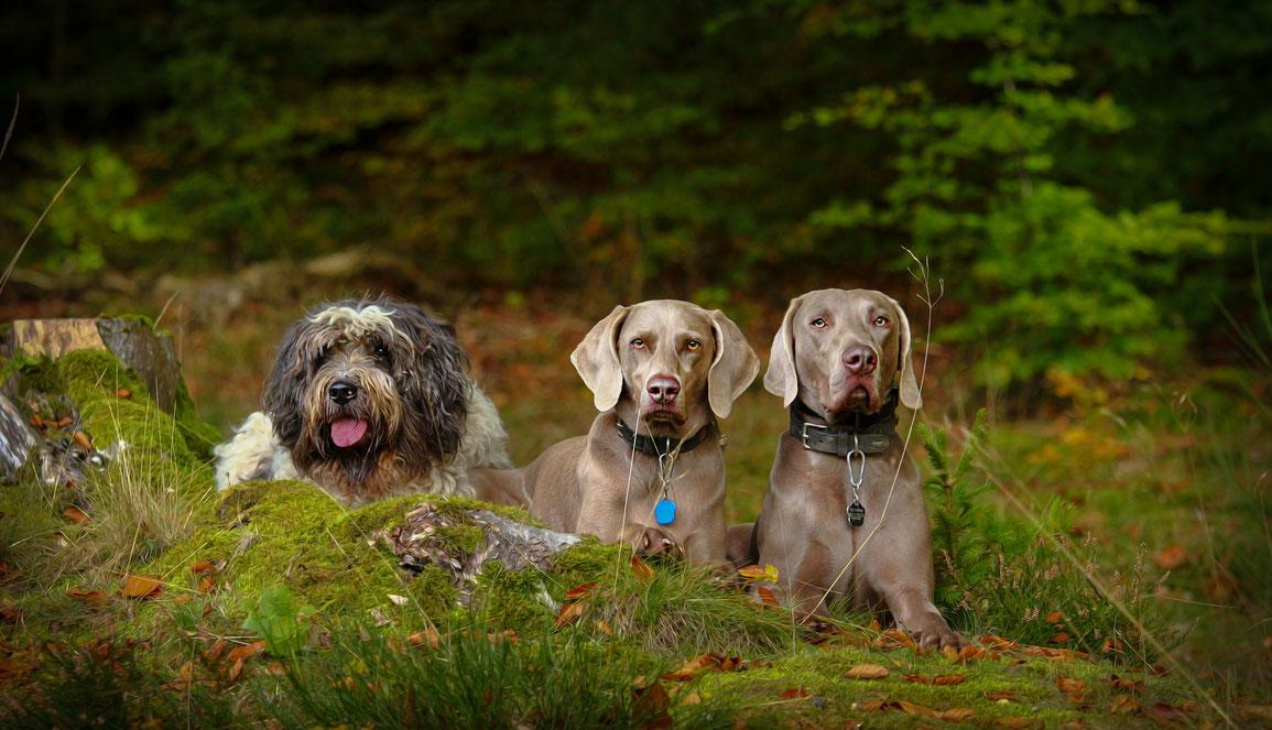 Meine Hunde Warndt Waldis
