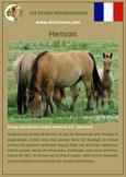 fiche cheval chevaux  identite race henson origine comportement caractere robe sante