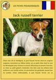 fiche identite chien jack russell terrier caractere origine comportement poil race