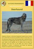 fiche chien identite race deerhound origine comportement caractere poil sante