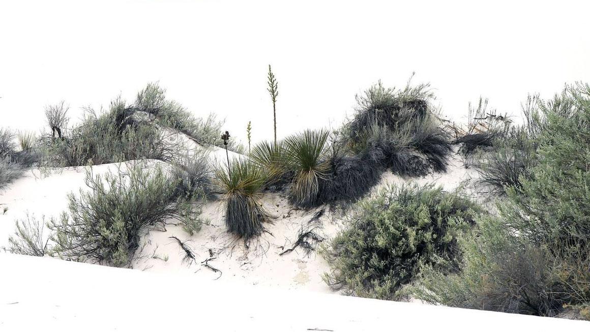 Bild White Sands NP • NM © Dr. Christian Zolles