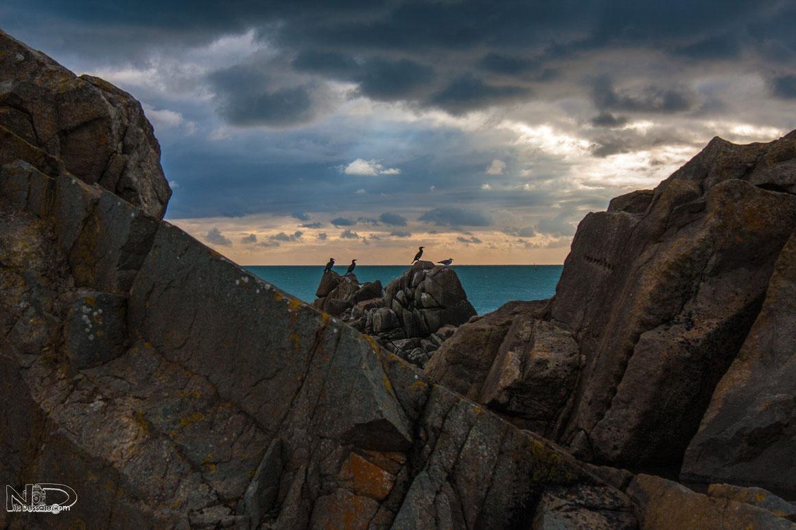 Photographie de la cote sauvage-du-Croisic- Rocher -Cormorans-Bretagne