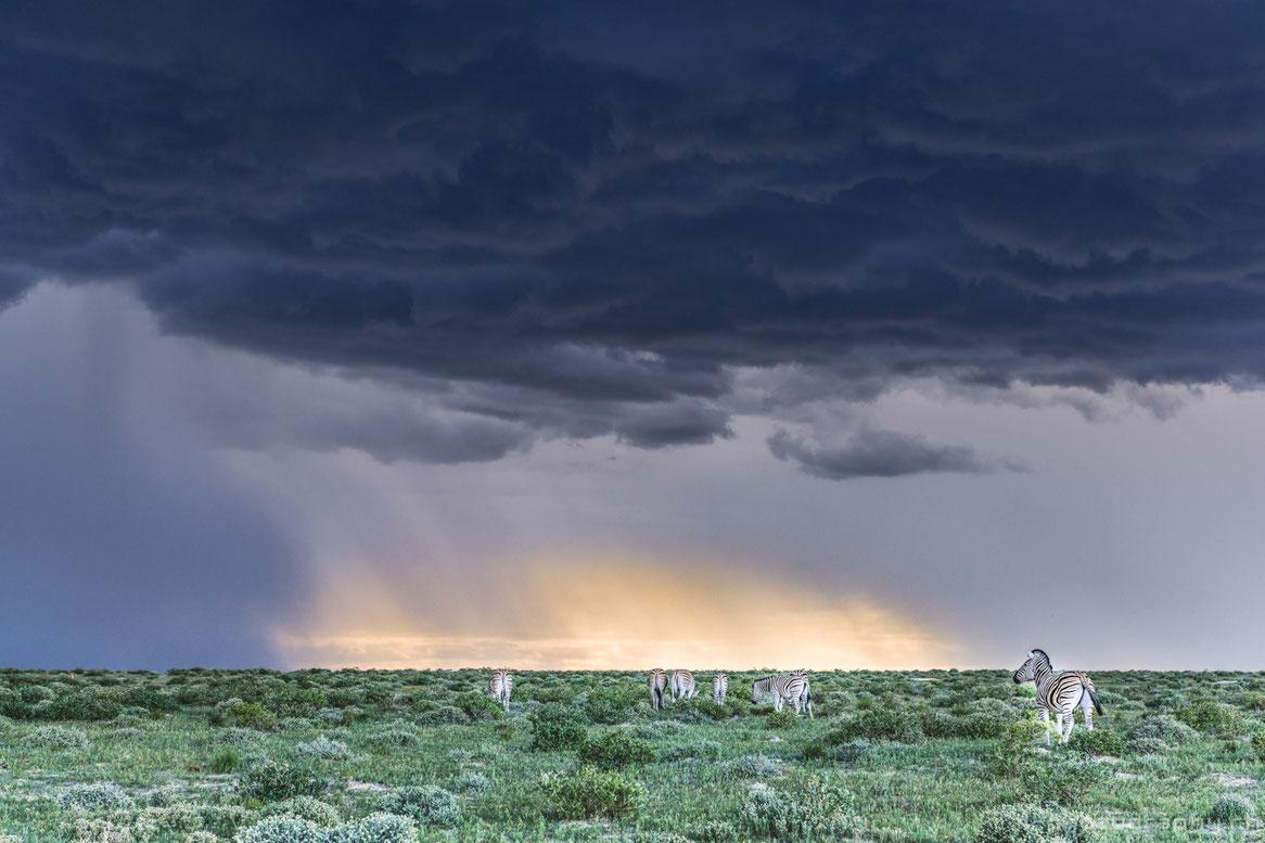 Regenzeit im Etosha Nationalpark in Namibia während einer Safari mit Gewitter.