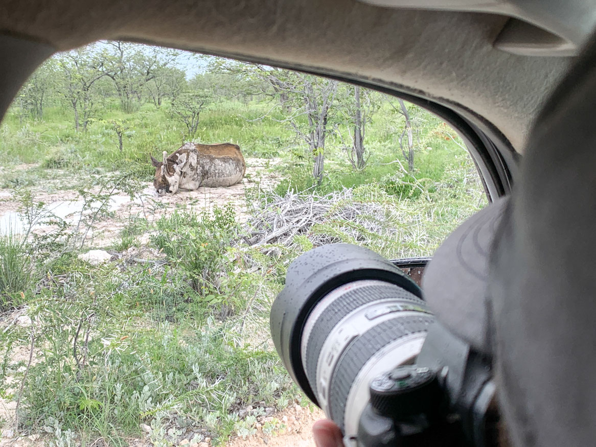 Spitzmaulnashorn im Etosha Nationalpark bei einem Schlammbad während einer Namibia Safari.