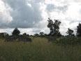 ナイロビ郊外のシマウマ  撮影:M.Maeda
