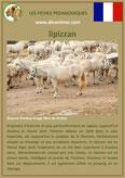 fiche cheval chevaux  identite race lipizzan origine comportement caractere robe sante