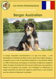 fiche chien identite race berger australien origine comportement caractere poil sante
