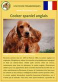 fiche chien pdf cocker spaniel anglais comportement origine caractere poil sante