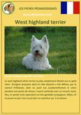 fiche chien pdf westie west highland terrier comportement origine caractere soin poil
