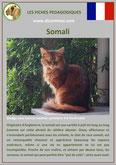 fiche chat pdf race somali comportement caractere origines poil sante couleu