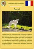 fiche chien identite race barzoi levrier russe origine comportement caractere poil sante