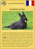 iche chien pdf scottish terrier comportement origine caractere soin poil