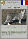 fiche chat race mau egyptien comportement origine caractere poil sante