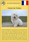 fiche chien pdf coton de tulear comportement origine caractere poil sante