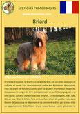 fiche chien race briard origine caractere comportement poil sante couleur