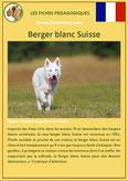 fiche chien identite race berger blanc suisse origine comportement caractere poil sante